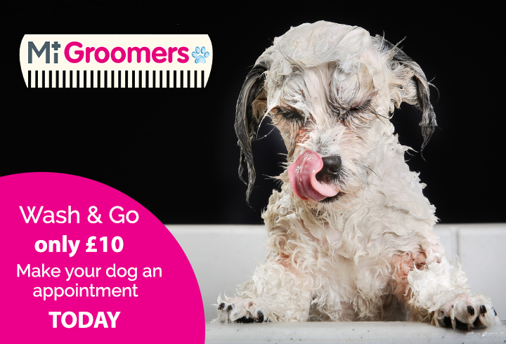 MiGroomers £10 wash and go offer