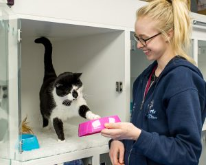 Patient Care Assistant looking after a cat