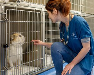 Vet looking after a dog in kennels